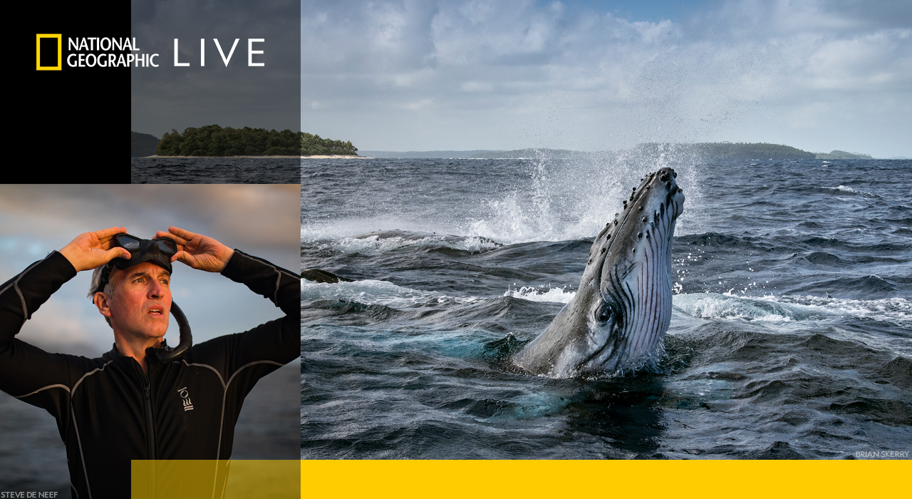 FREE LIVESTREAM: Nat Geo Behind the Curtain: Secrets of the Whales with Brian Skerry